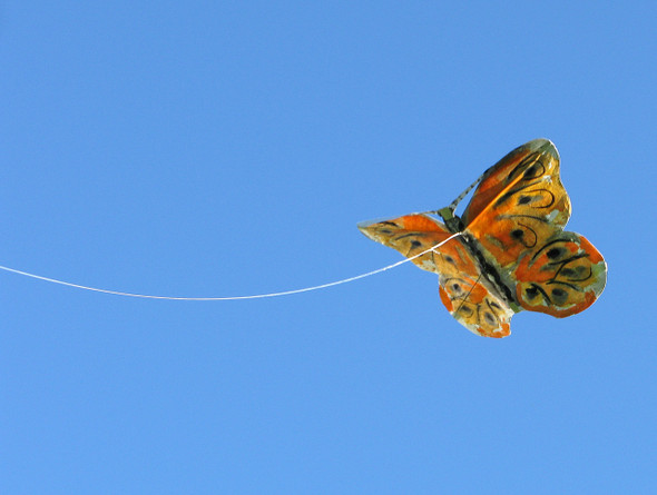 Great Winds Kites - GW Butterfly kite single pack