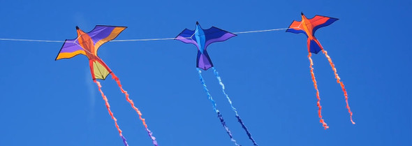 ittw-Scarlett Tropical Parrot Kite