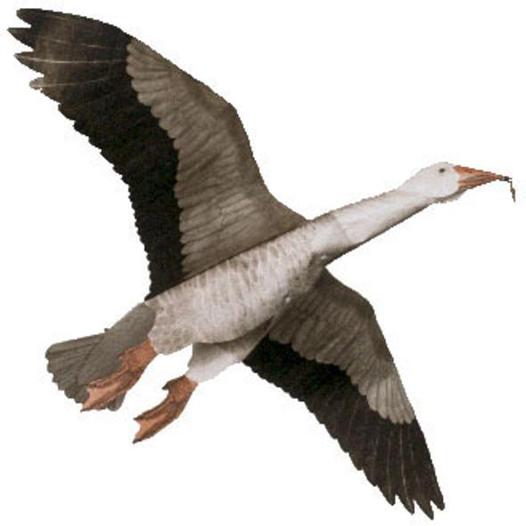 "Jackites - Blue Goose ""Assembled"""