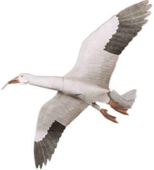 "Jackites - Snow Goose ""Assembled"""