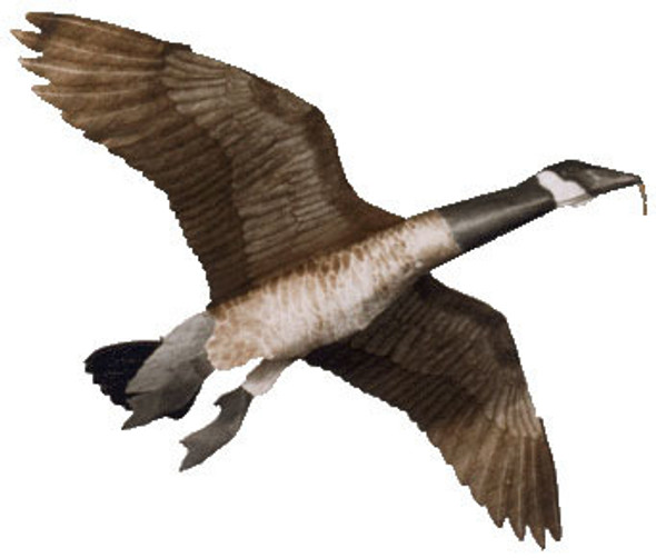 """Jackites - Giant Canada Goose """"Assembled"""""""