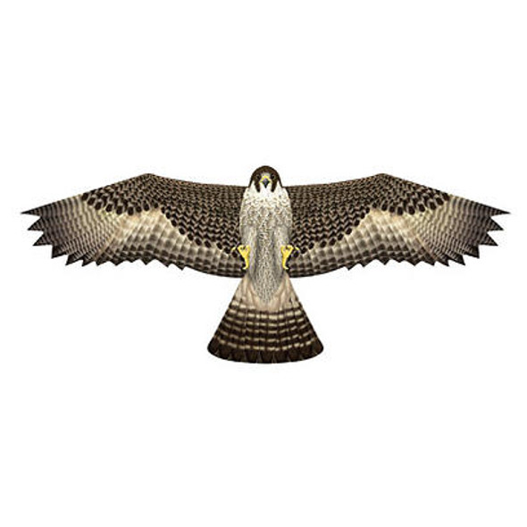 "XKites - Birds of prey Kite  ""Falcon"""