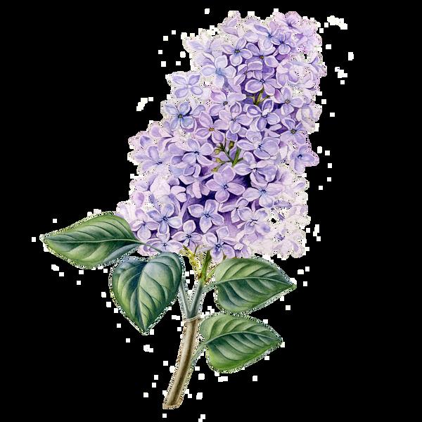 Lilac Body Spray