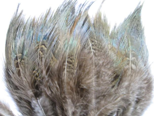 Strung Pheasant Rump 1