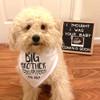 Personalized Big Brother Dog Bandana: Leaf & Heart