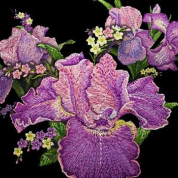 Irresistible Iris by Ann Lauer
