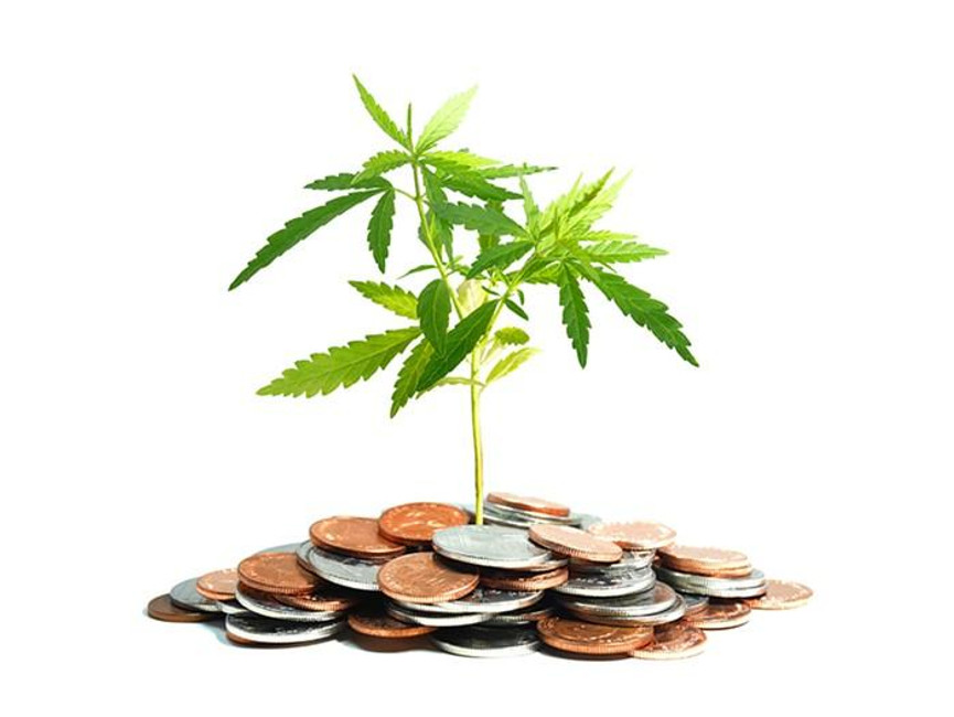 The Highest Paying Jobs in the Canna-Industry