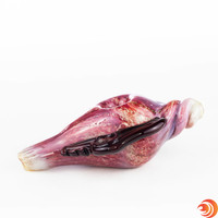 """The  6"""" red glass snail shell pipe from Atomic Blaze Online Head Shop can double as a beautiful decoration when not in use."""