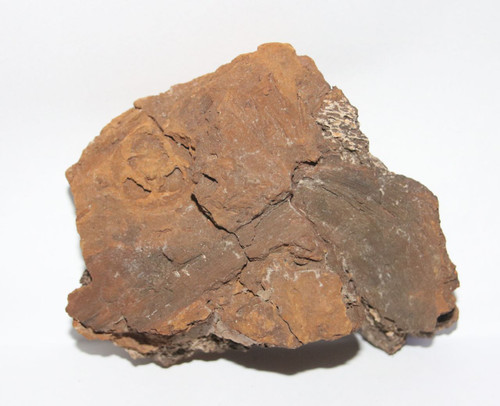 Fossil Pine Cone Imprint in Dinosaur Bone Branch Hell Creek Formation Cretaceous