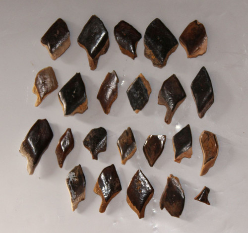 Gar Fish Scale LOT - 23 Total Pieces from HELL CREEK Formation Late Cretaceous