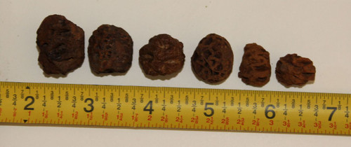 Six (6) Meta Sequoia Pine Cones Dinosaur Age Hell Creek Formation USA CRETACEOUS