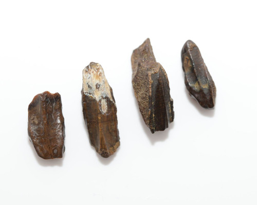 Four (4) Edmontosaurus Duck Bill Teeth Tooth - Hell Creek Formation CRETACEOUS