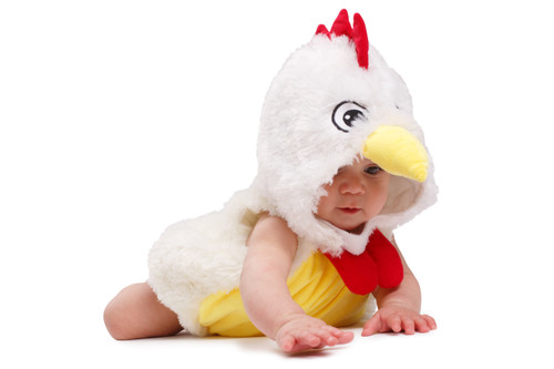 Baby Rooster Chicken