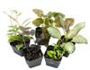 5 Terrarium Suitable Plants