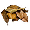 Premium Southern Magnolia Leaf Litter