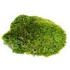 Mood Moss - 1 Gallon