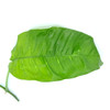 Philodendron inaequilaterum