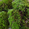 Live Mood Moss