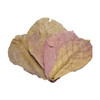Indian Almond Leaves - 5 pack
