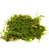 Sheet Moss - 1 Gallon
