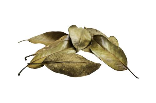 Premium Dwarf Southern Magnolia Leaf Litter