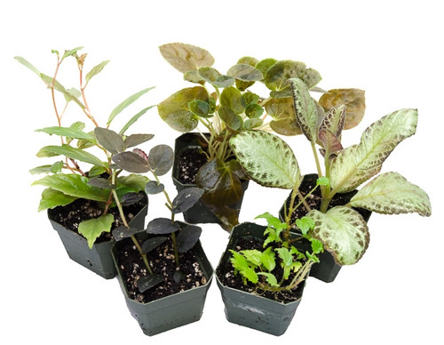 5 Terrarium Suitable Plants