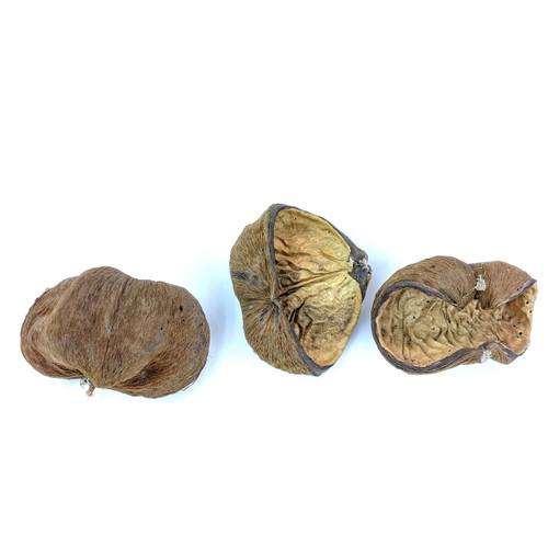 Velvet Nut Pod