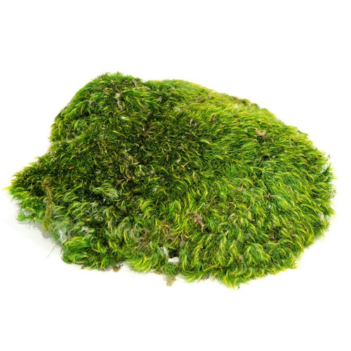 Mood Moss - 1 Gallon
