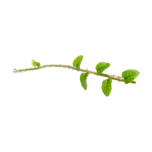Pleopeltis percussa