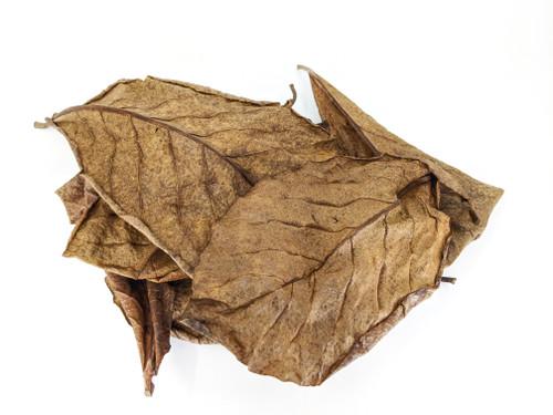 Indian Almond Leaf Litter Peru