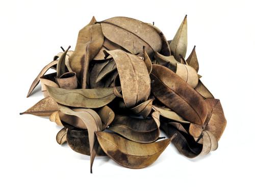 Peruvian Jungle Marupa Leaf Litter