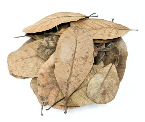 Peruvian Jungle Casho Leaf Litter