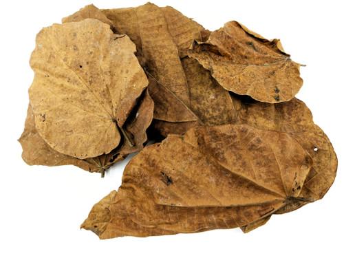 Peruvian Jungle Topa Leaf Litter