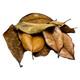 Premium Southern Magnolia Leaf Litter - FULL CASE