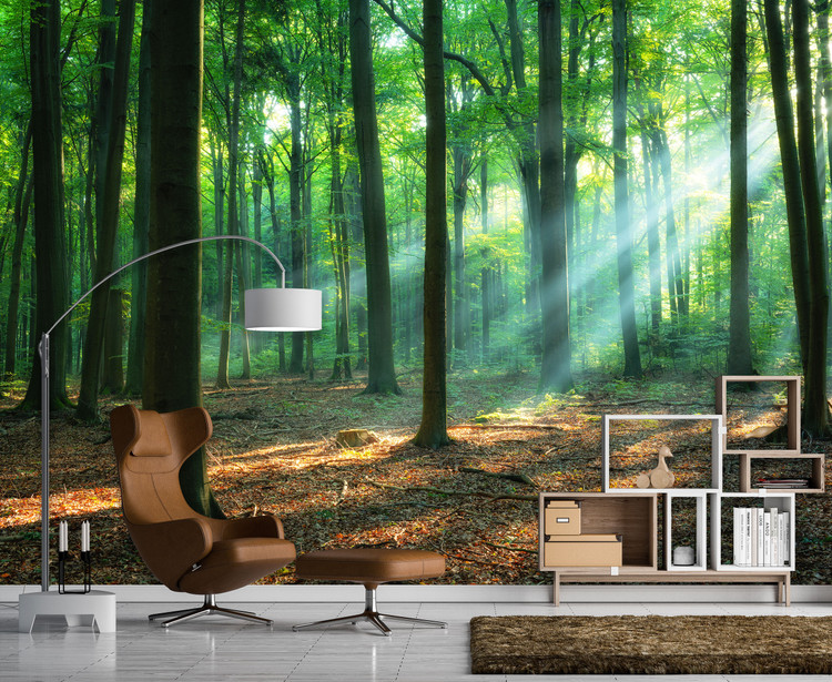 Morning Sun in Beautiful Green Forest Wall Mural