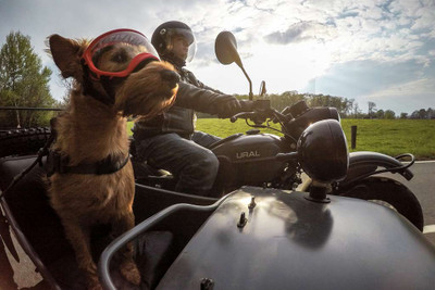 Dogs and Motorcycles