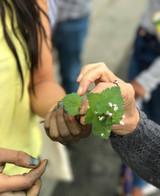 Urban Herbalism with Antonia Perez