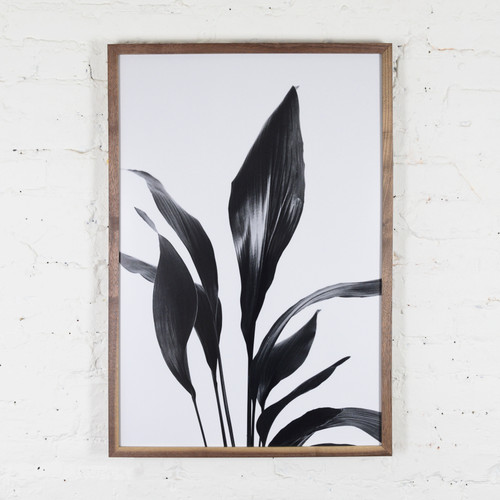 Plant Studies, Untitled 2