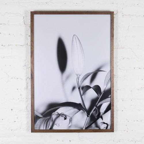 Plant Studies, Flower's I've Got, 9