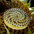 Sunflower Graphic Channel Cap