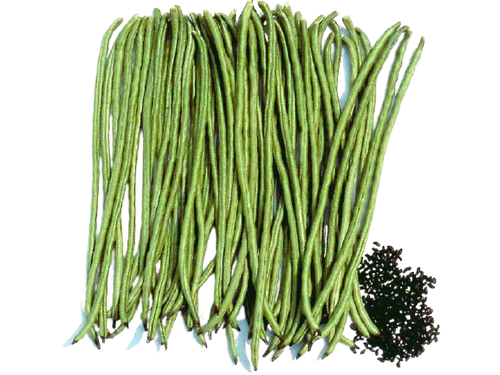Known-You Seed Asparagus Bean Green Arrow 20g