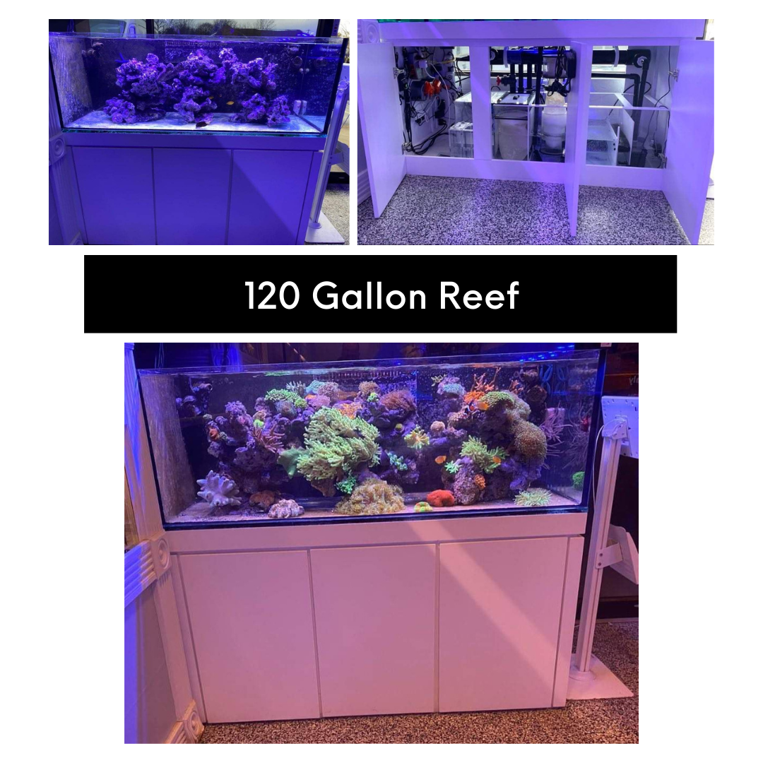75-gallon-one-year-transition-3-.png