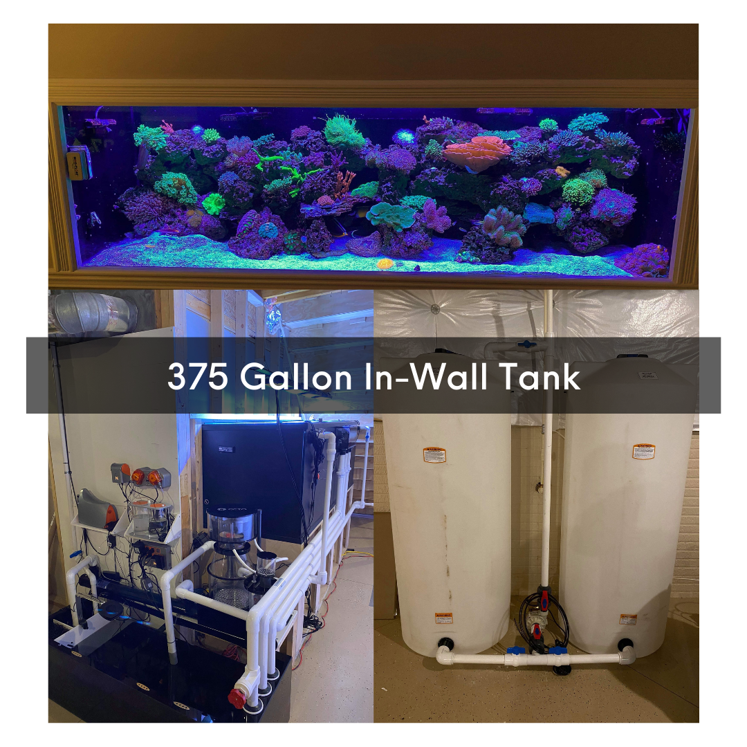 75-gallon-one-year-transition-4-.png