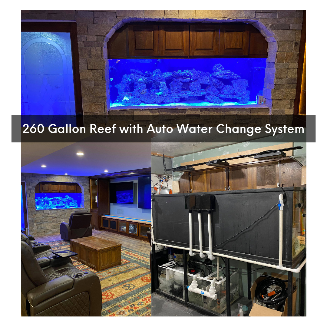 75-gallon-one-year-transition-6-.png