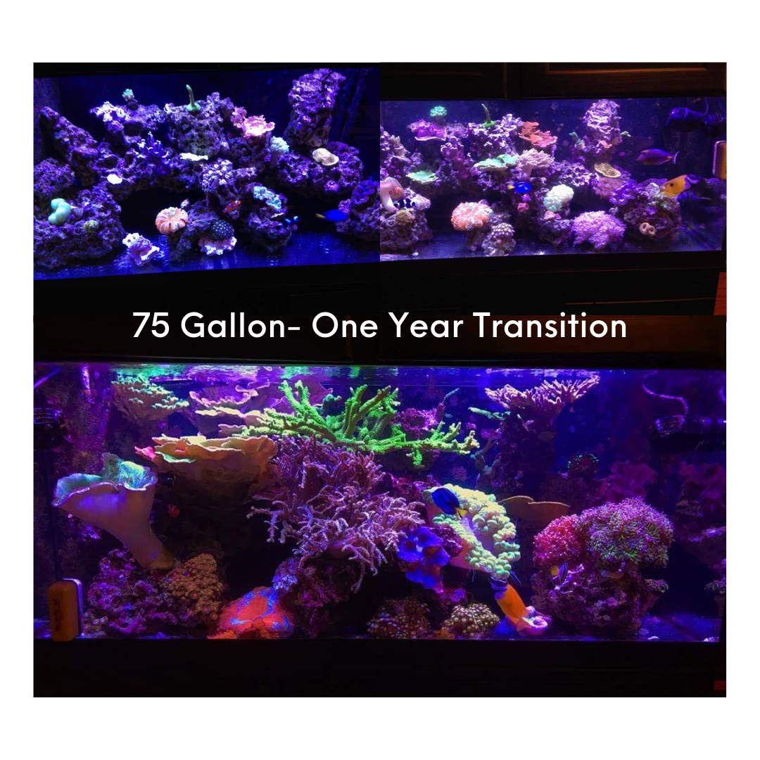 75-gallon-one-year-transition.png