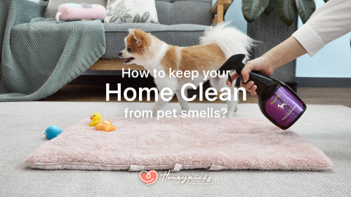 Keeping Your Home Clean from Pet Smells!