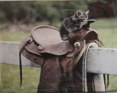 Cat on Saddle Note Cards