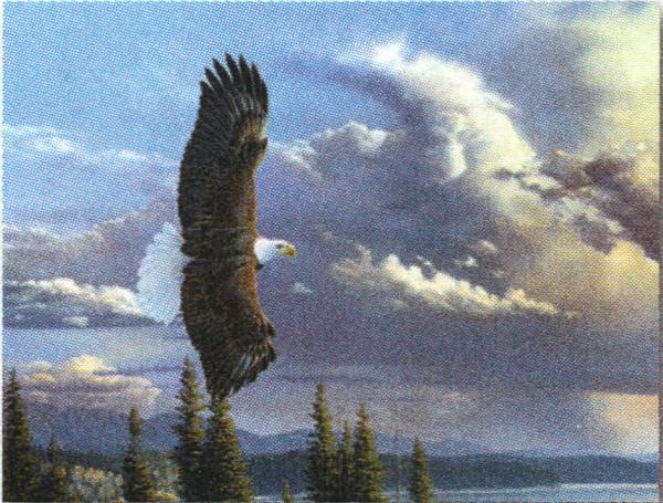 Eagle -Note Card