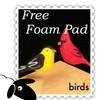 Starter Woolpets Kit - Birds