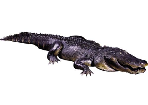 Alligator  Crate Chg